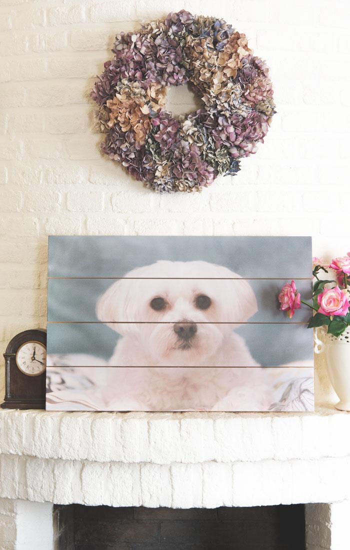 Mijn Hond Nikkie's Foto op Hout